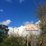 Where To Eat In Malibu: Coral Beach Cantina